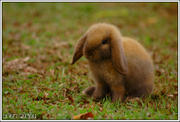 th_480600769_the_brown_rabbit_by_acidpilot_122_424lo.jpg